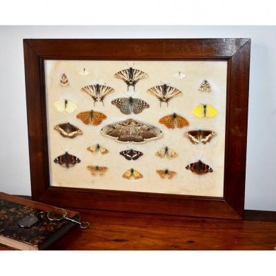 Boîtes De Papillons Naturalisés, Entomologie, Fin XIX ème