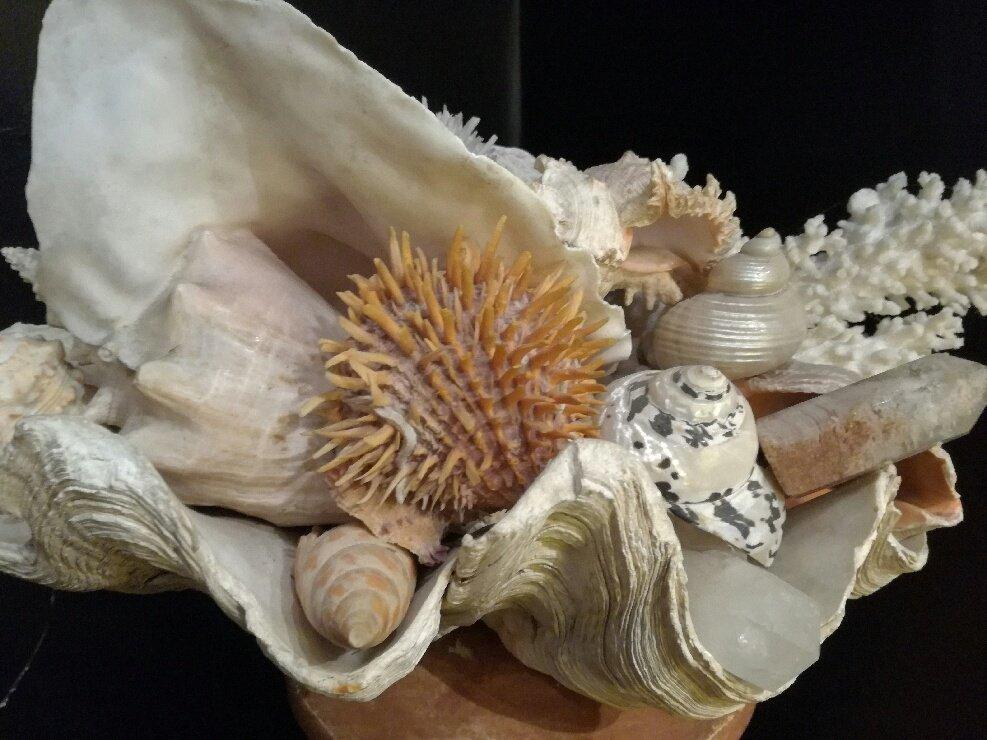 Clam With Seashells