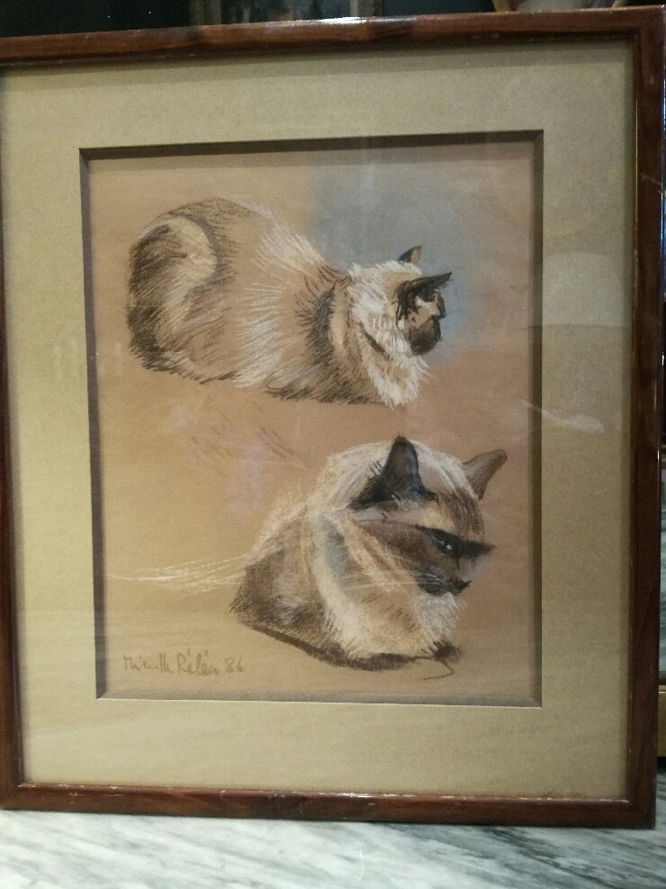 Cat Studies, Pastel And Charcoal, 1986