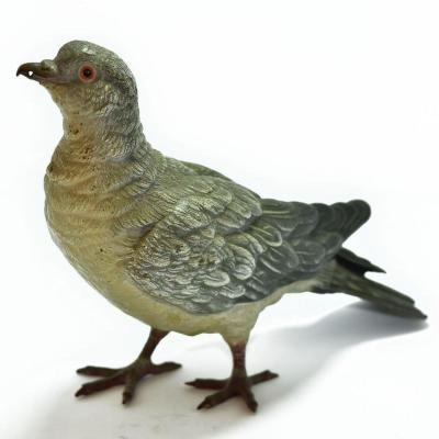 Pigeon Biset Bronze De Vienne taille réelle Geschultz époque XIXème
