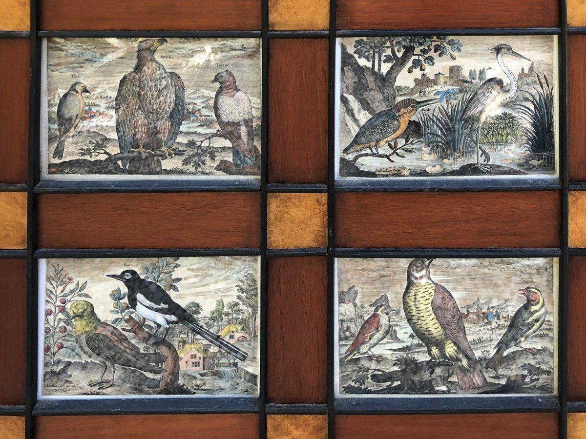 15 Gravures Et Page De Garde Du Traité D'ornithologie D'adriaan Collaert encadrées-photo-2