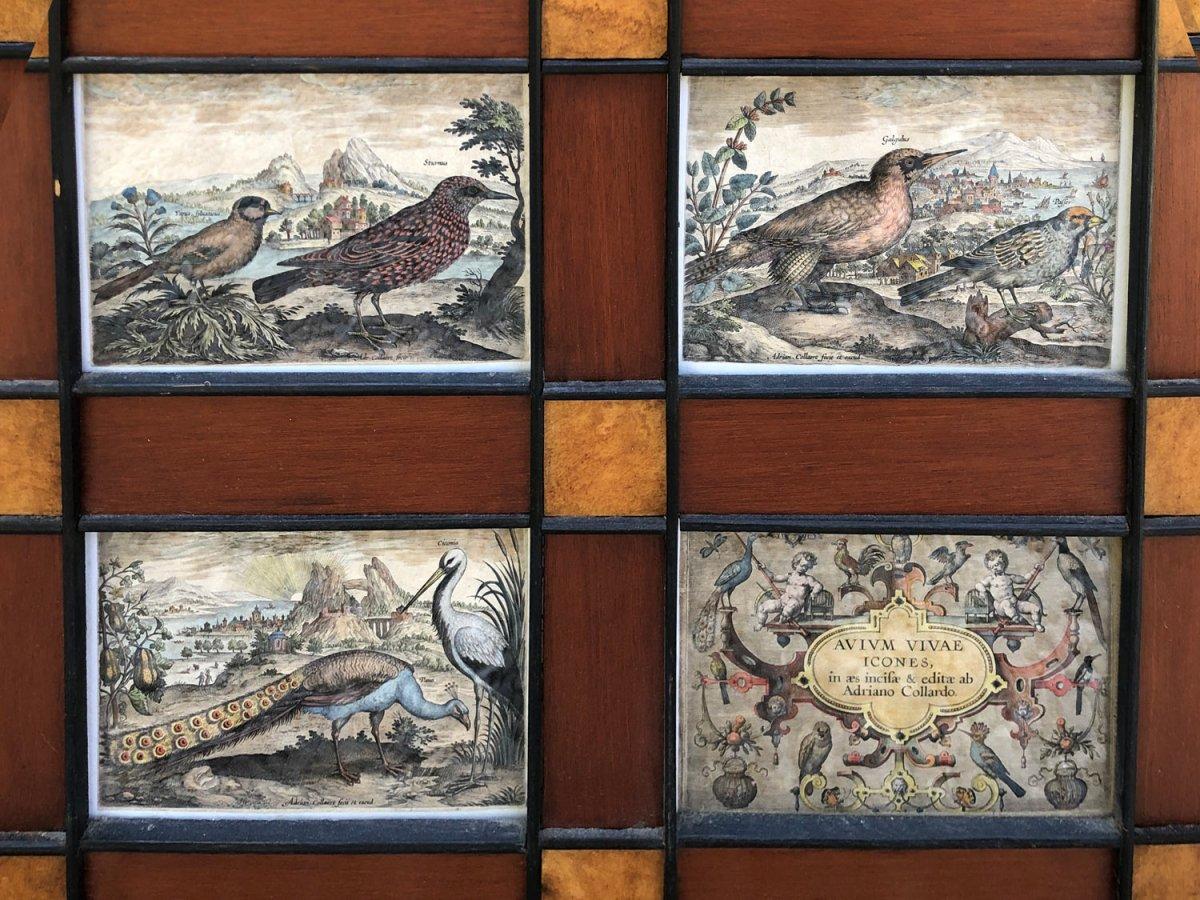 15 Gravures Et Page De Garde Du Traité D'ornithologie D'adriaan Collaert encadrées-photo-4