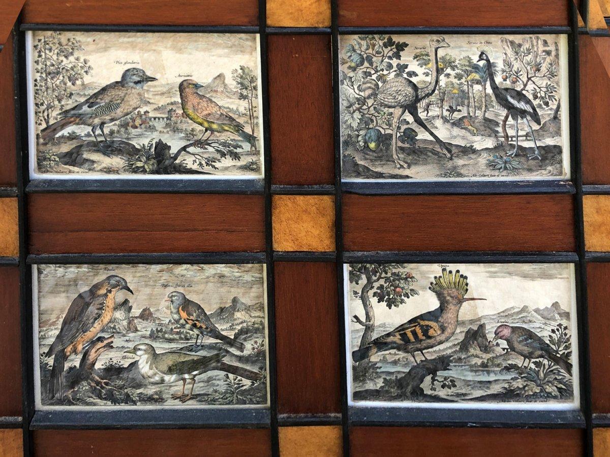 15 Gravures Et Page De Garde Du Traité D'ornithologie D'adriaan Collaert encadrées-photo-1