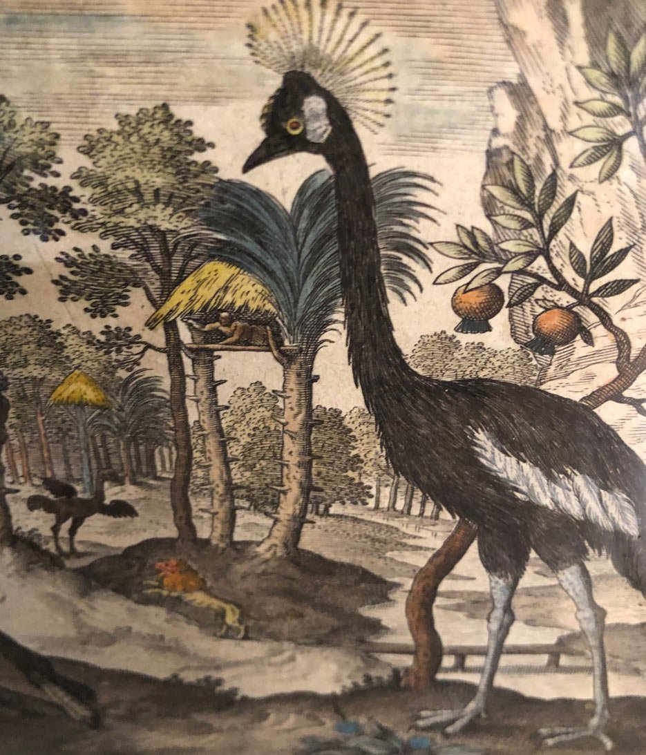 15 Gravures Et Page De Garde Du Traité D'ornithologie D'adriaan Collaert encadrées-photo-8