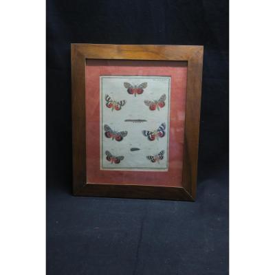 Gravure De Papillons