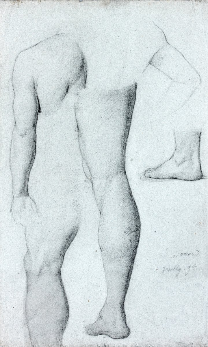 Antoine Gabriel Favard (1829 - ?): Studies Of Different Members Of The Human Body