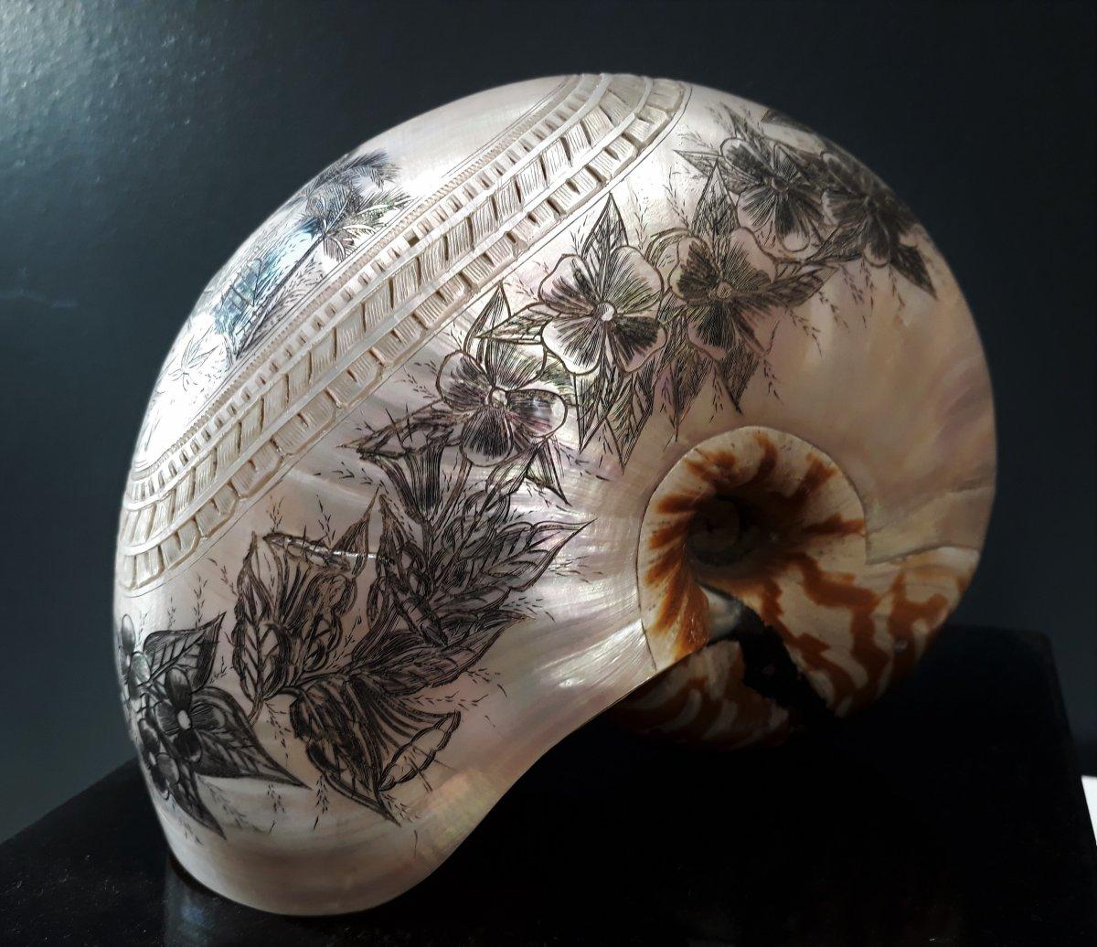 Nautilus Engraved By Bagnard New Caledonia