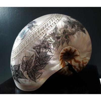 Nautilus Engraved By Bagnard New Caledonia
