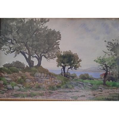 """Bergier Alfred (1881-1971)  Aquarelle """"Oliviers prés de Martigues"""""""