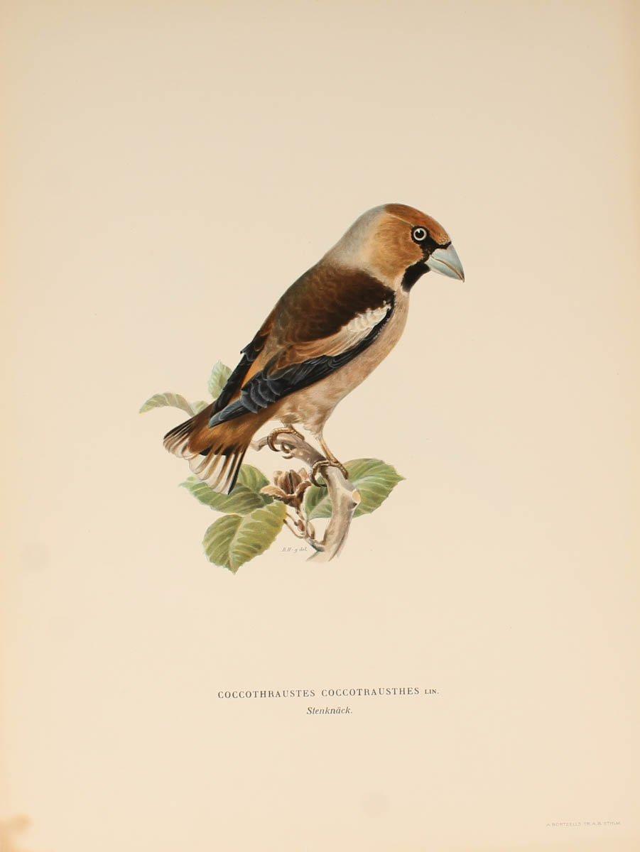 12 Lithographs Of Birds - 1921-photo-1