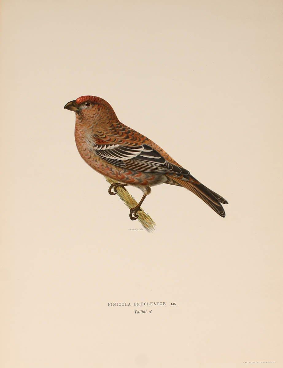 12 Lithographs Of Birds - 1921-photo-5