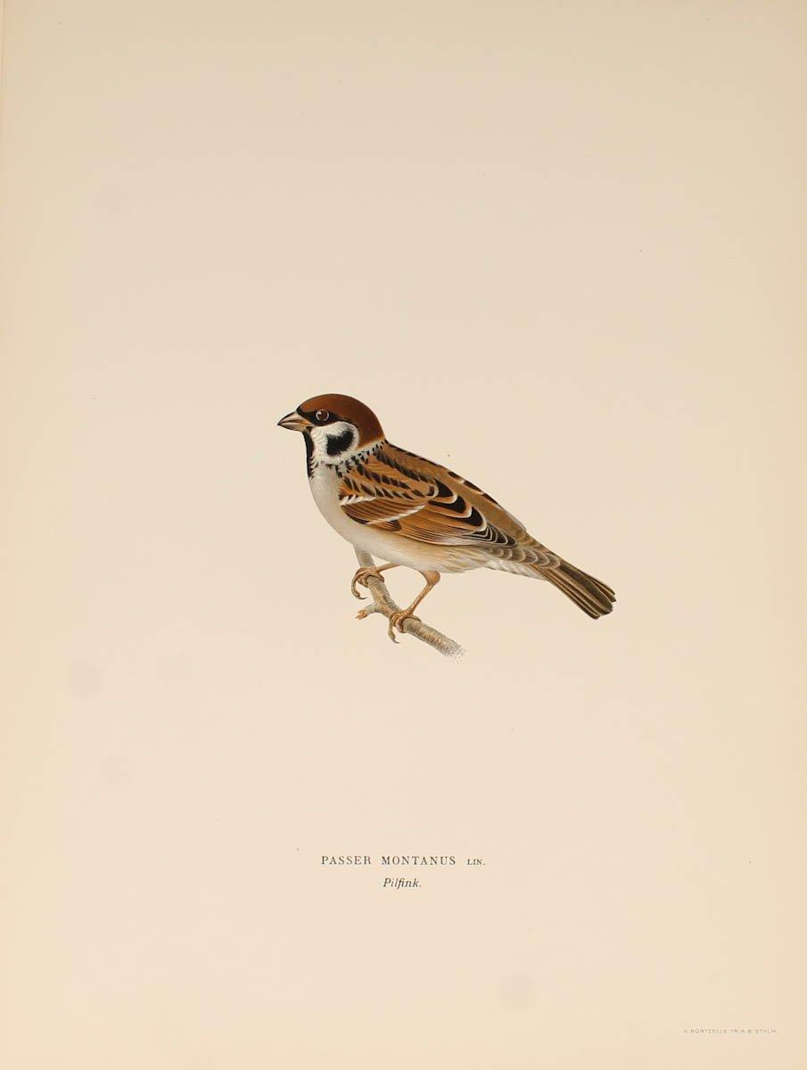12 Lithographs Of Birds - 1921-photo-6