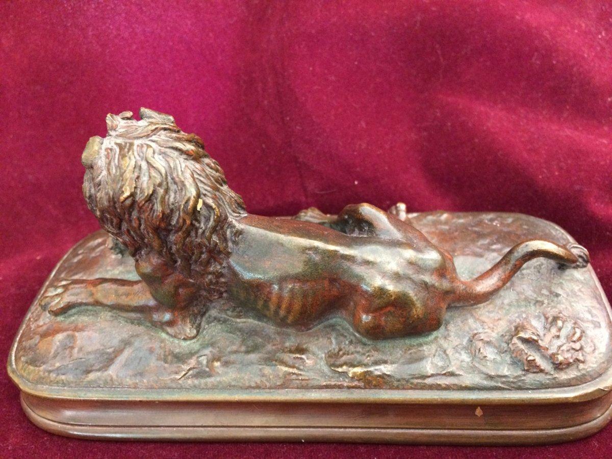 Lion Couché En Bronze à Patine Médaille -photo-4