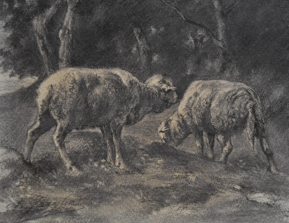 Charles-emile Jacques (1813-1894) Two Sheeps, Drawing