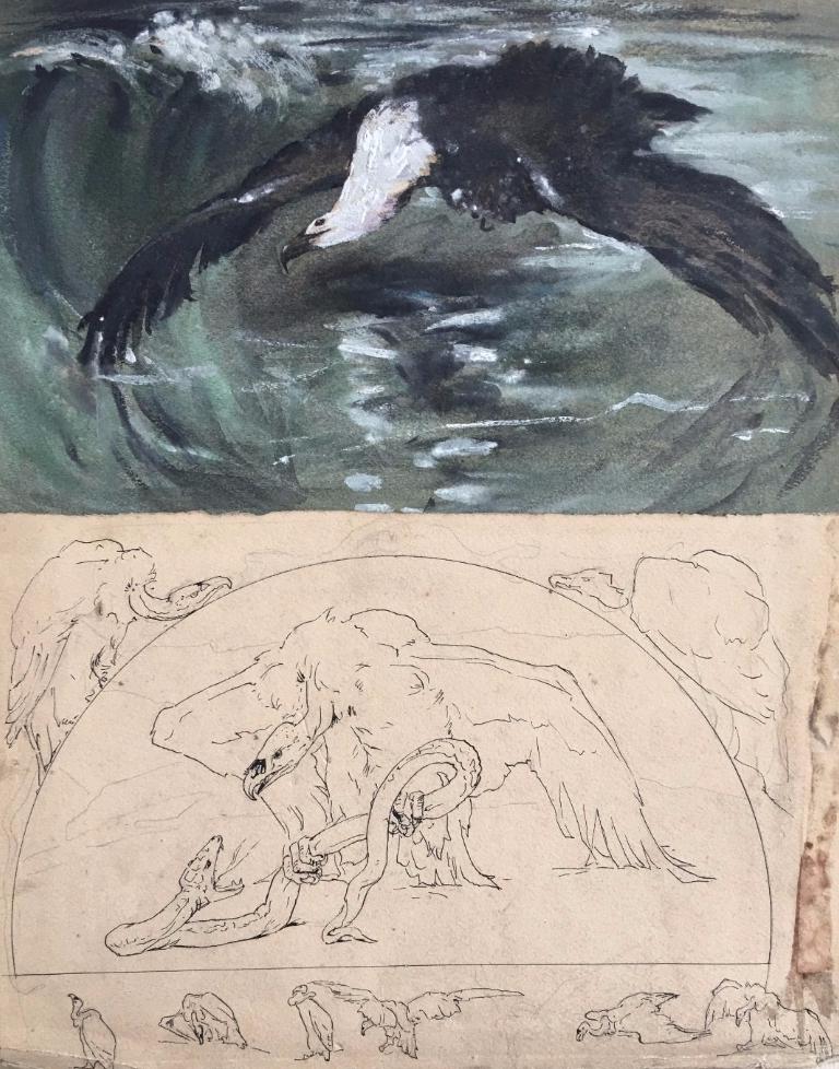 Casimir Brau-Simon, Goéland Et études De Vautour, Aquarelle Et Plume