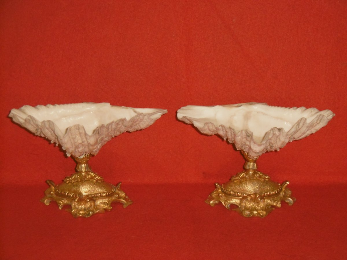 Pair Of Bronze Mounted Shells
