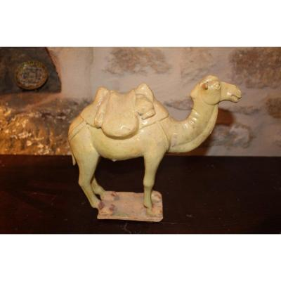 Camel Standing On Terrace