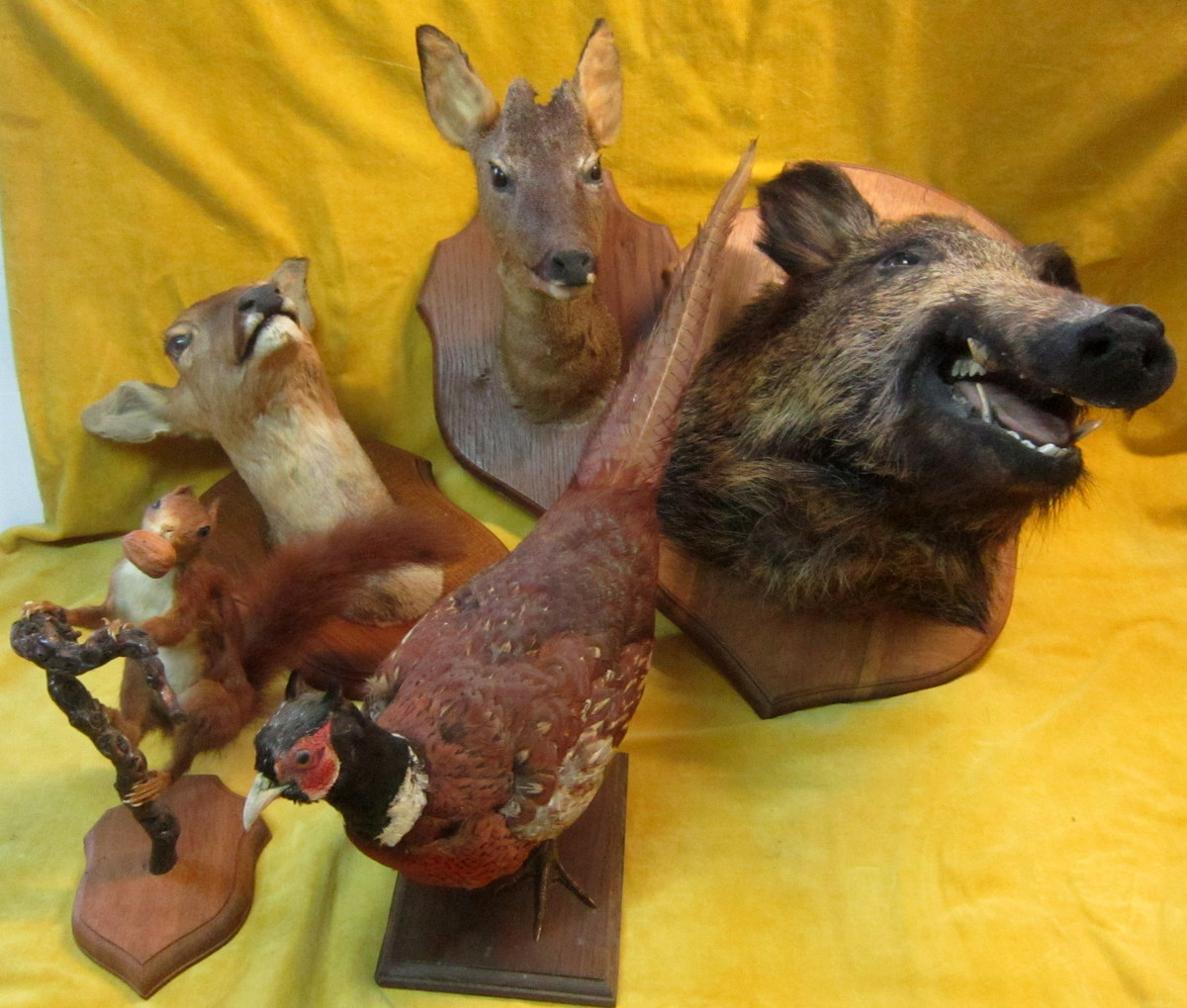Taxidermy -notary Curiosity-trophy-science Collection