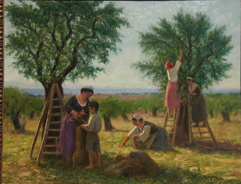 Théo Mayan (1860-1936), The Harvesting Of Olives.