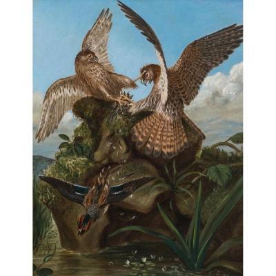 Combats De Faucons, XIXe Siècle  Cercle De John James Audubon (1785-1851)