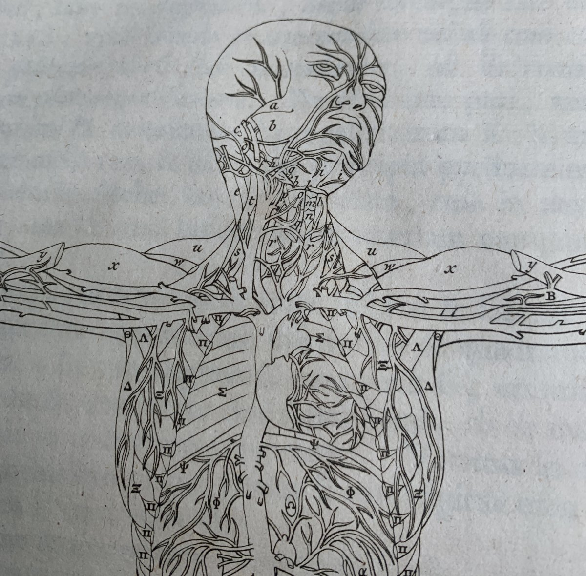 Anatomic Book, 89 Engraves Albinus (bernhard Siegfried); 1761