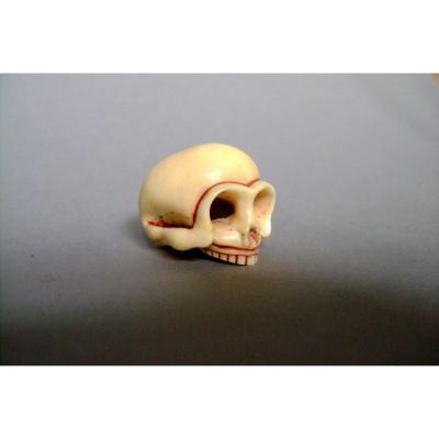 Netsuke en ivoire. Crâne. Japon fin EDO début Meiji.