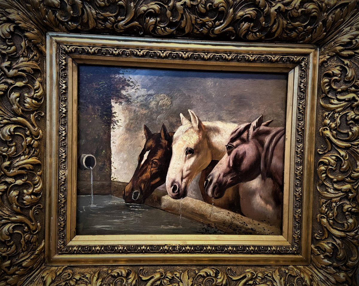 Horses Drinking From The Fountain