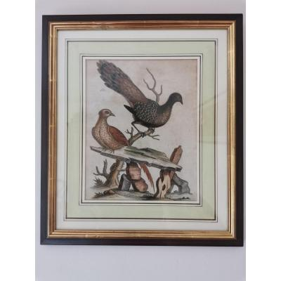 English Engraving With Birds, Georges Edwards, Eighteenth Time