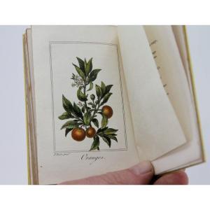 La Corbeille de Fruits par Charles Malo, planches rehaussées, Paris 1818 - rare