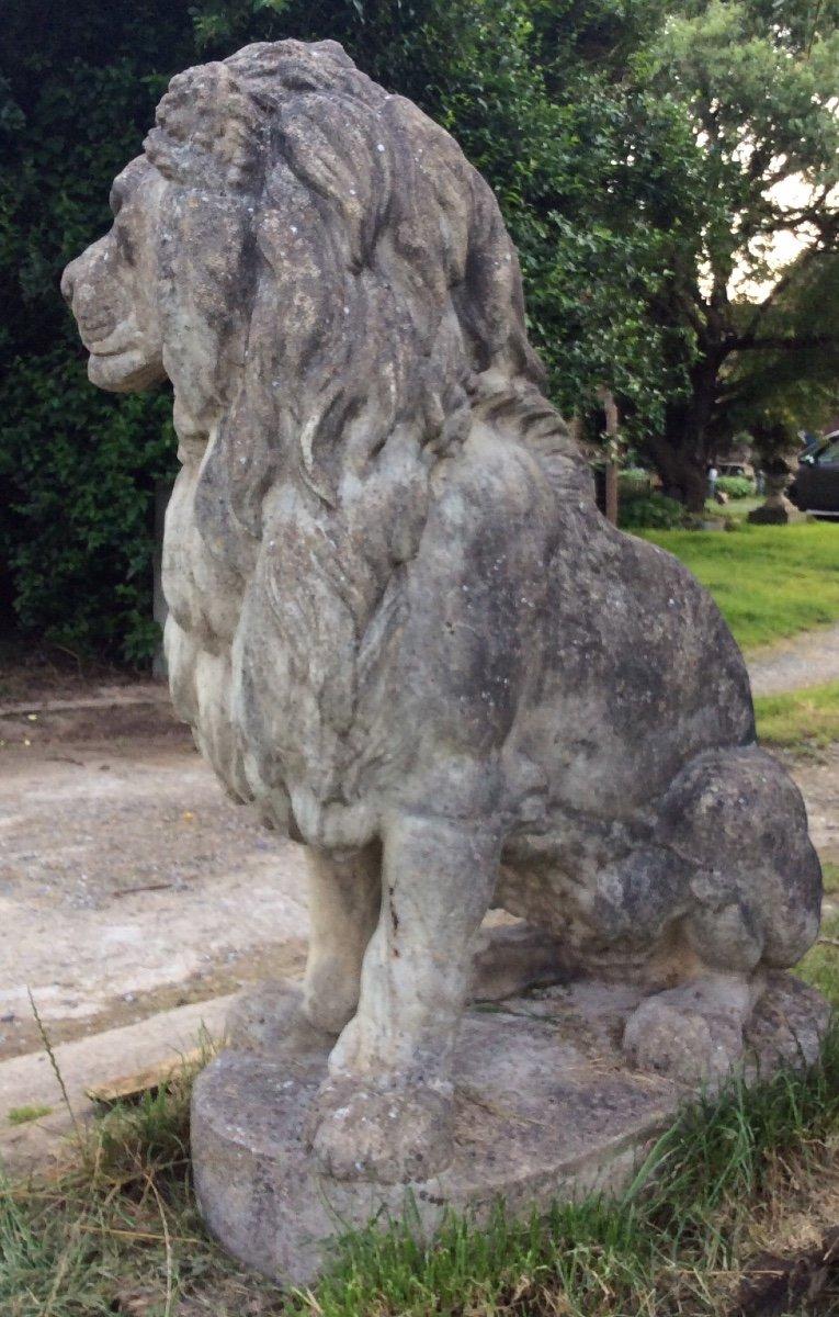 Superbe Paire De Lions En Pierre-photo-4