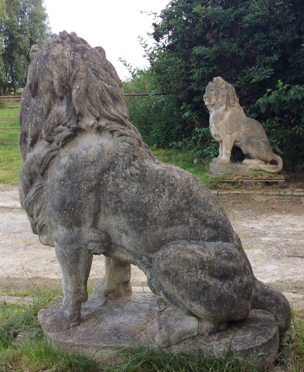 Superbe Paire De Lions En Pierre-photo-5