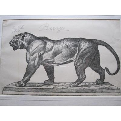 Tigre qui marche, gravure de Firmin Gillot d'après ANTOINE LOUIS BARYE, XIXe