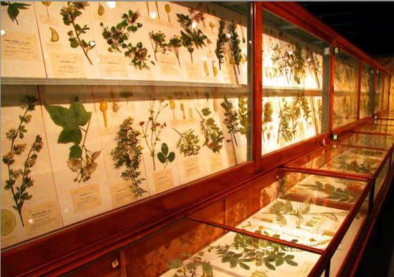 Glass flower collection (1890-1930s) de Leopold & Rudolph Blaschka du Harvard Museum of Natural History. Cambridge